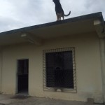 Just a dog on a roof