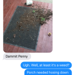 We didn't like that plant anyway